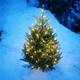 Pityriasis Rosea U2013 Christmas Tree Rash. Christmas Tree