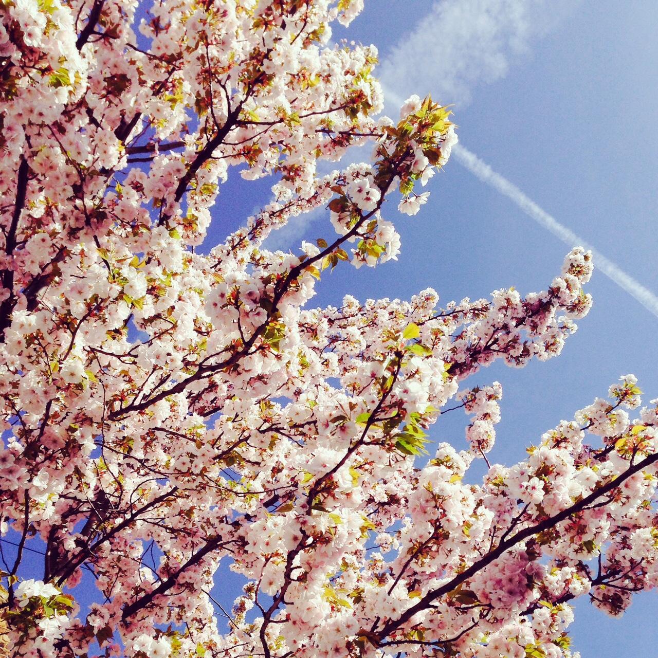 Dr Morton's - Hayfever in spring